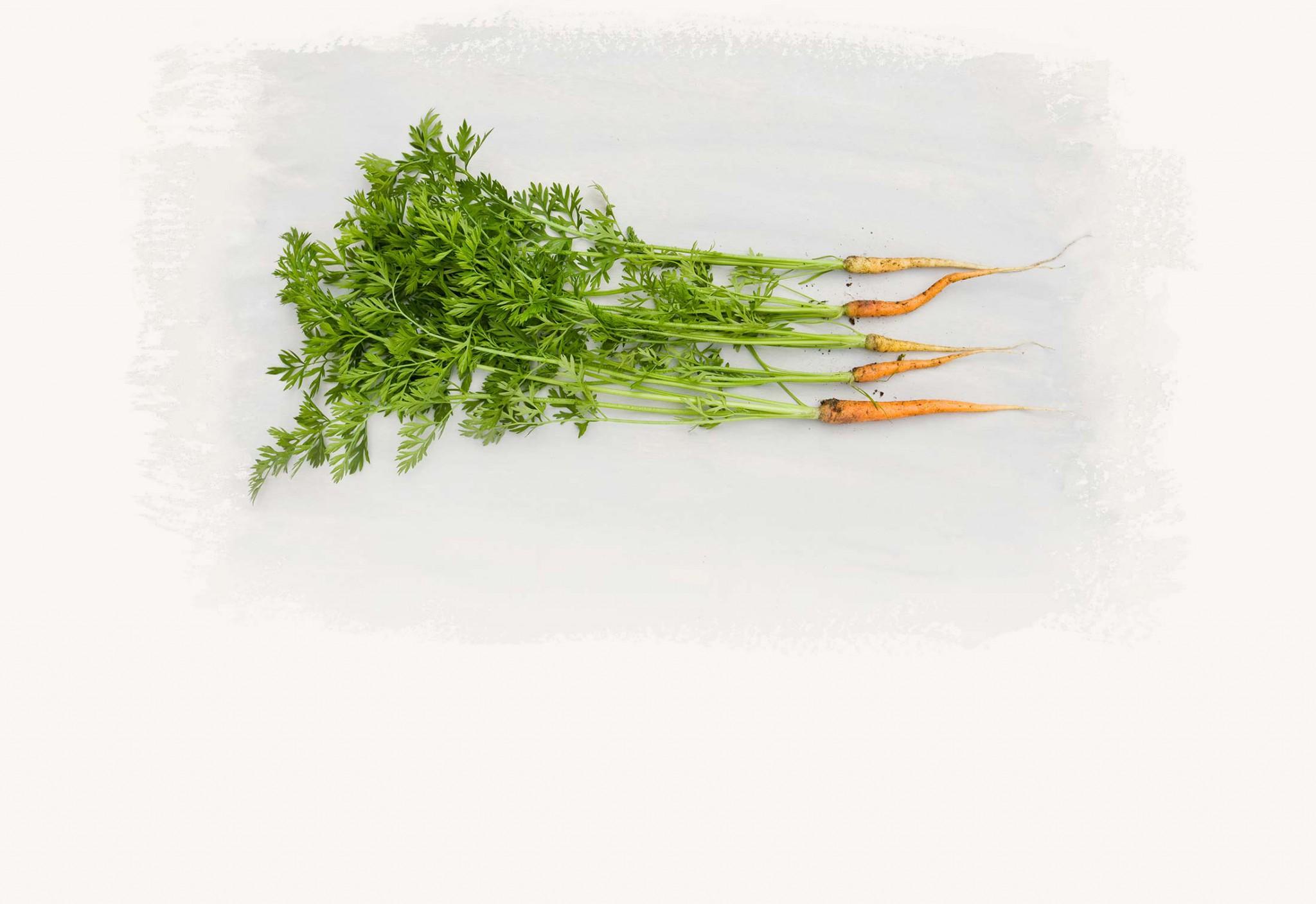 gro – slå rot – spira – växa – expandera – frodas – bli större